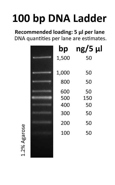 100 Bp Dna Ladder Related Keywords 100 Bp Dna Ladder